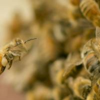 3.3. bee natural pollen rich