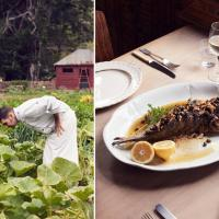 New Zealand Cuisine Chef Fish foodie tour4