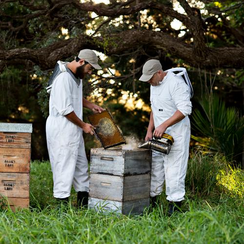 tahi new zealand honey natural beekeeping