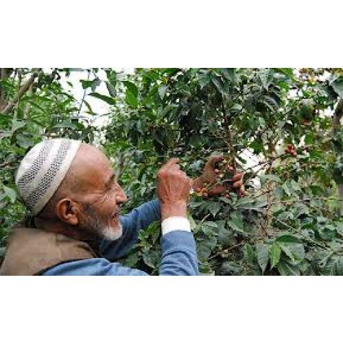 Yemen Coffee Grower The Kiwi Importer