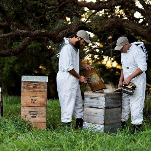 tahi manuka honey bee keepers 2